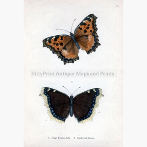 Large Tortoise-shell Camberwell Beauty 1854 Prints KittyPrint 1800s Insects & Reptiles
