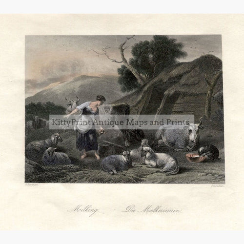 Milking c.1840 Prints KittyPrint 1800s Genre Scenes