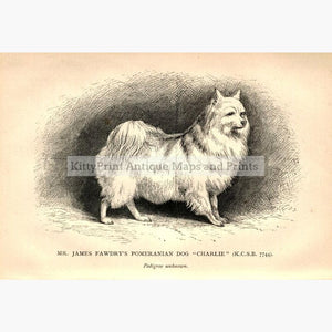 "Mr James Fawdry's Pomeranian Dog ""Charlie"" c.1880 Prints KittyPrint 1800s Dogs"