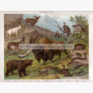 North Arctic Fauna Nearktische Fauna 1906 Prints KittyPrint 1900s Genre Scenes Monkeys & Primates