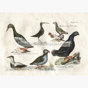 Northern Ducks and Birds 1755 Prints KittyPrint 1700s Birds Norway