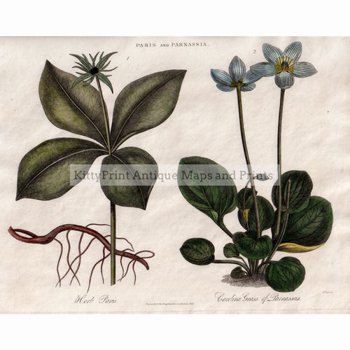 Paris And Parnassia 1822 Prints
