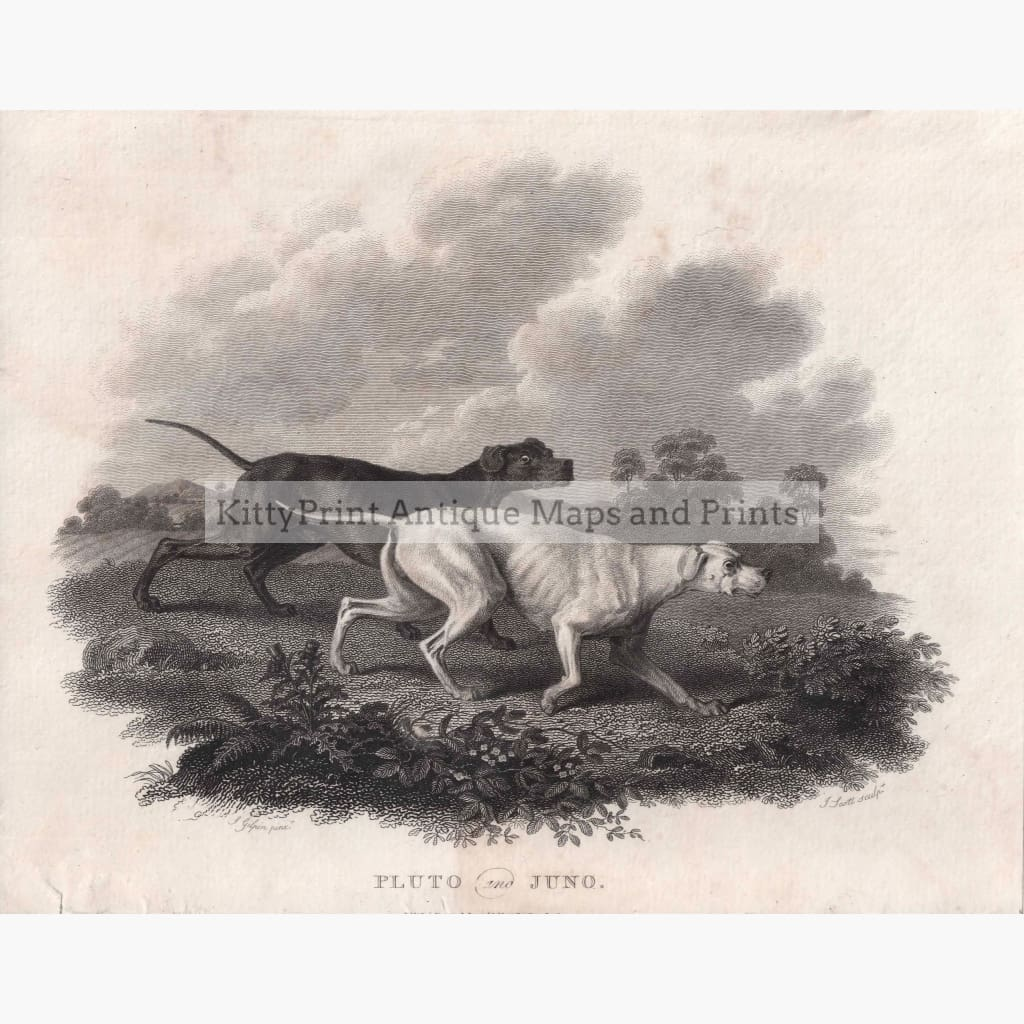 Pluto And Juno 1802 Dogs Prints