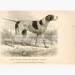"Pointer ""Special"" c.1880 Prints KittyPrint 1800s Dogs"