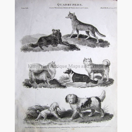 Quadrupeds Pl.2 Dogs 1810 Prints