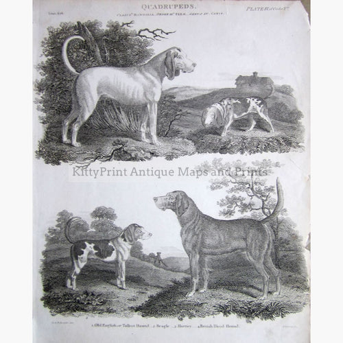 Quadrupeds Pl.4 Hound Dogs 1810 Prints