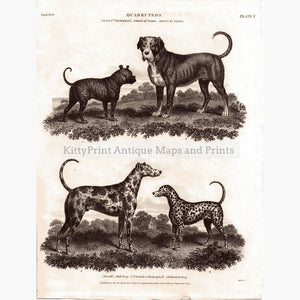 Quadrupeds Pl.5 Bulldog 1810 Prints
