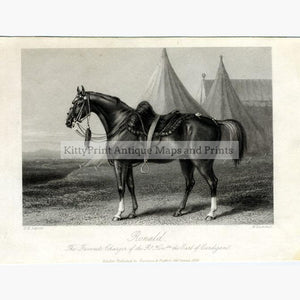 Ronald. The Favorite Charger of the Earl of Cardigan 1856 Prints KittyPrint 1800s Horses