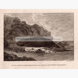 Sea Otter Of Nootka Sound 1801 Prints