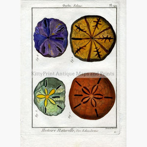 Sea Urchin Oursin Echinus plate 149 c.1790 KittyPrint