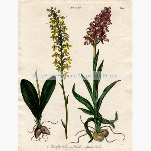 Set of 2: Butterfly and Marsh Orchids 1820 Prints KittyPrint 1800s Botanical (Plants)