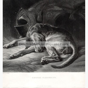 Sleeping Bloodhound c.1860 Prints KittyPrint 1800s Dogs