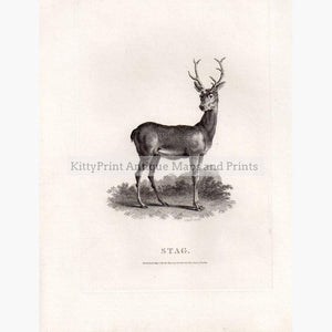 Stag 1801 Prints KittyPrint 1800s Monkeys & Primates