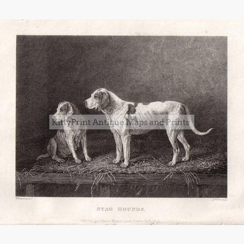 Stag Hounds 1812 Prints KittyPrint 1800s Dogs