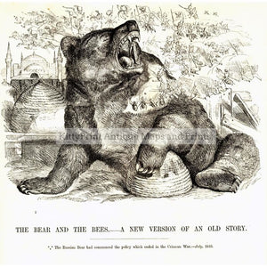The Bear And Bees C.1880 Prints