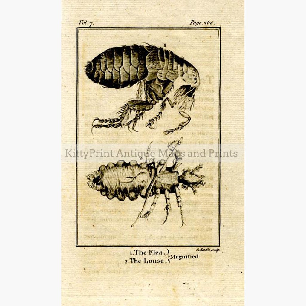 The Flea. The Louse. Magnified 1790 Prints KittyPrint 1700s Insects & Reptiles