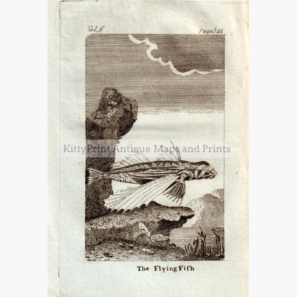 The Flying Fish,1790 Prints KittyPrint 1700s Fish