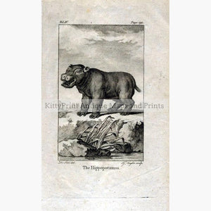 The Hippopotamos 1790 Prints KittyPrint 1700s Monkeys & Primates