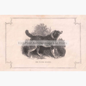 The Water Spaniel 1855 Prints