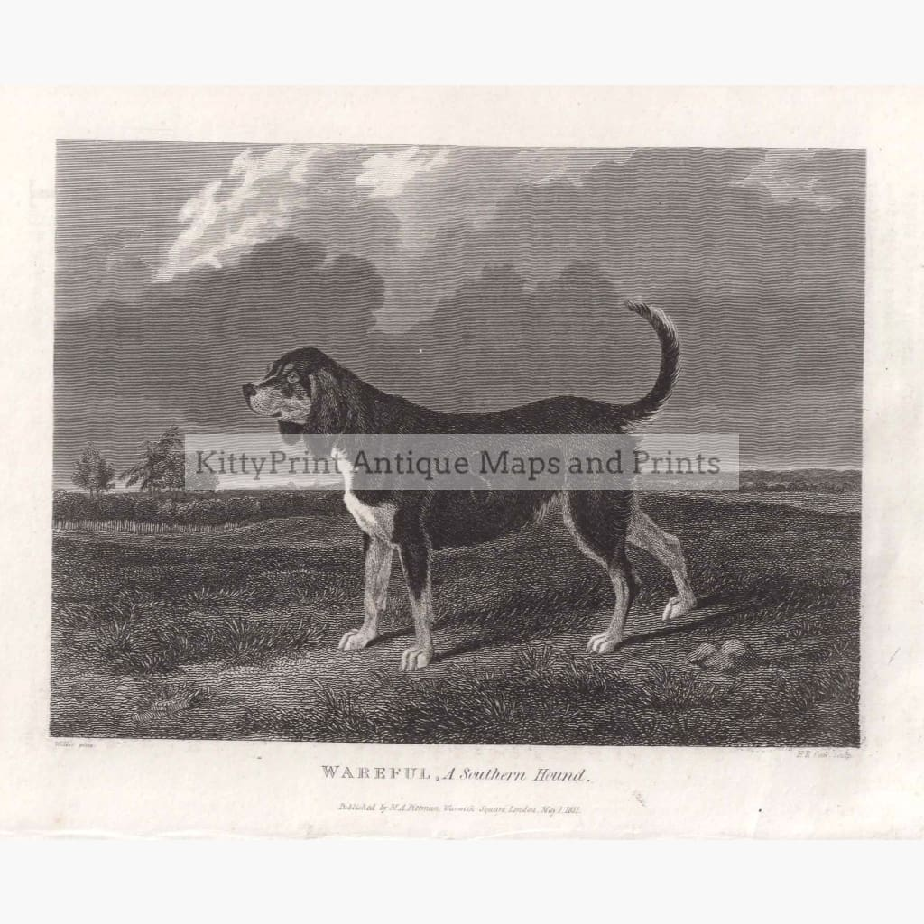 Wareful. A Southern Hound 1831 Prints