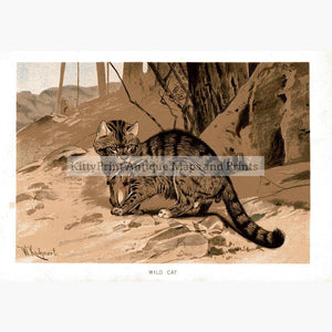Wild Cat c.1896 Prints KittyPrint 1800s Monkeys & Primates