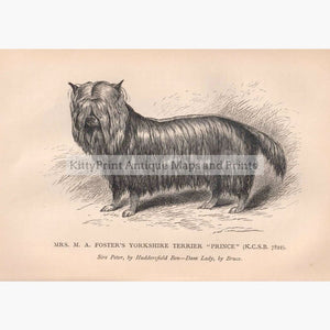 Yorkshire Terrier 1880 Prints