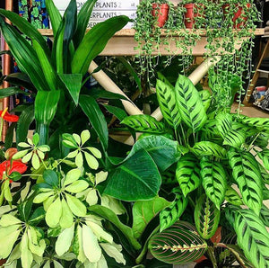 Indoor Plants - It's Good To Be Green Baby!