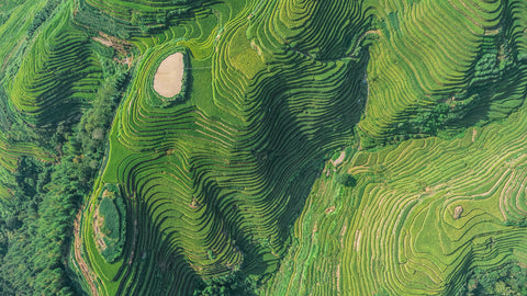 aerial shots, rice terraces, china, green mural, green earth, rich earth, rice, food, landscape, chinese landscape,