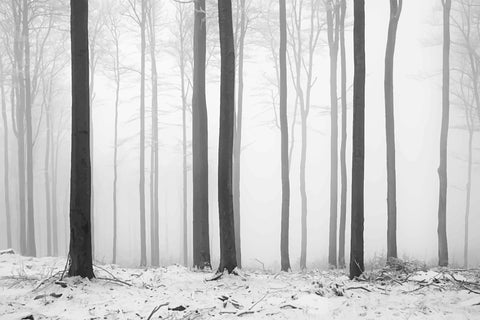 Black and white trees, snowy forest, abstract trees, winter forest, black and white, white forest, winter woods, trees, tree, forests,