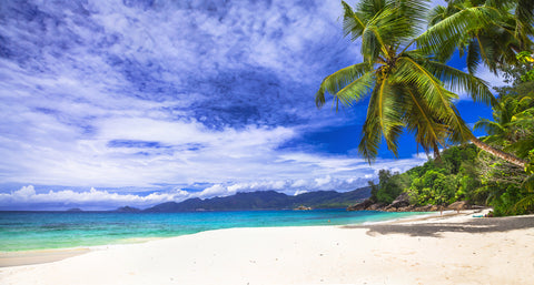 Beach scene, beaches, palm tree, Hawaii, white sand, blue skies, summer beach, trees,