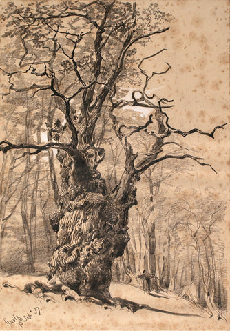 Ancient tree, tree, drawing mural, sketch mural, ago images, ago archives, sepia, sepia murals,
