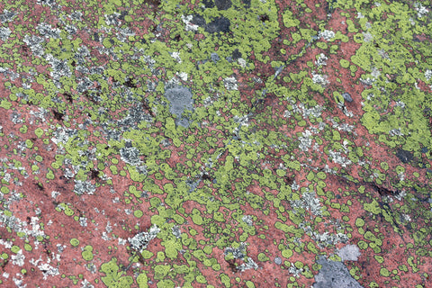 Green moss, rock, natural rock, nature photography, rock textures, lichen, rock surface, rock mural,