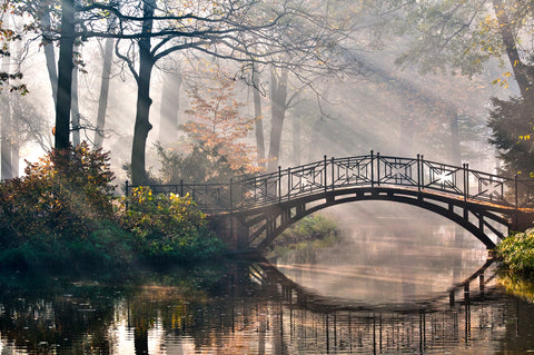 Trees, walking, bridge, water, forest, sunlight, sun rays, river, bridges, woodland, misty morning, forest walk, Thrones,