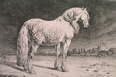 horse, black and white, vintage sketch, traditional, old sketch, etching, AGO, white horse, horses, horse wallpaper, horse mural,