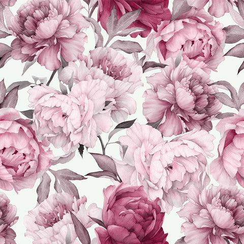 Peony, Peonies with a white ground, white, large scale floral, Large flowers,