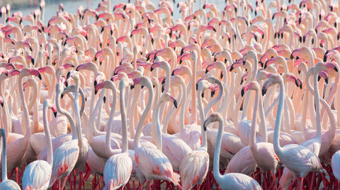 flamingos,pink flamingo, pink, animal mural, nature mural, nature photography, pink and white, kids,