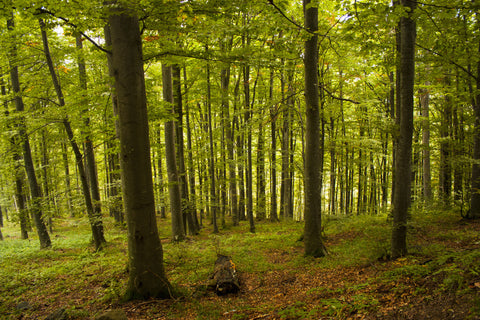 forest, bright sunny forest, woods, summer forests, trees, nature photography, nature,