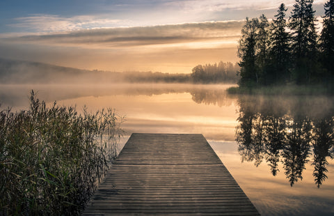 The dock, dock, lake, misty morning, sunset, trees, water, wooden dock, at the lake, romantic mural, zen mural, calmness, sky, lake shore,