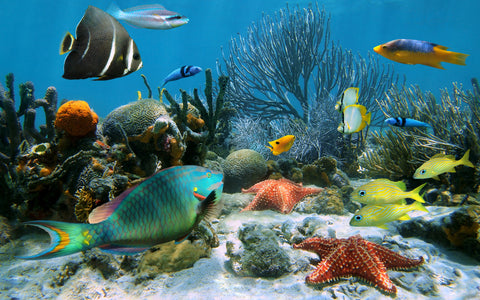 fish, tropical fish, water, colorful fishes, star fish, corral, under water, under the sea, blue fish, yellow fish, kids murals,