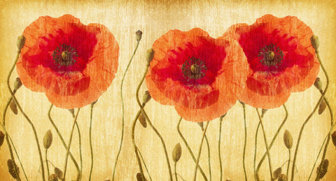 poppies, poppy mural, rust, red, ochre, large floral, large flower heads. poppy wallpaper,