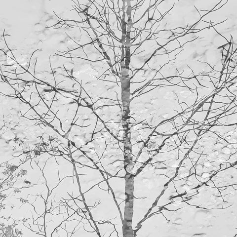 Reflection, monotone tree, black and white tree, grey tree, modern tree, abstract tree, tree mural,