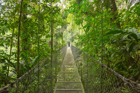 rain forest, bridge, leaves,tropical,jungle,rope bridge,green, green leafy,Thailand, tropics,forests,woods,Zen, spa, health studios,