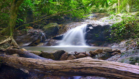 waterfall, water, tropical forest, rain forest, greens, river,