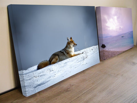 canvas wraps, wolf picture,