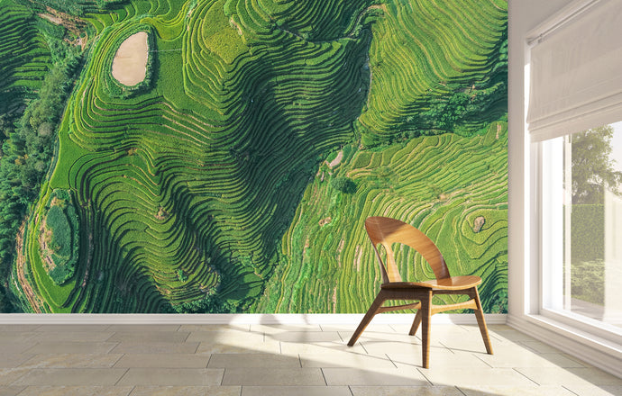 wall mural of rice fields in China. High quality printed paper mural.