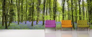 Bluebell forest / Trees