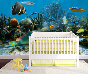 Tropical fishes  / Kids