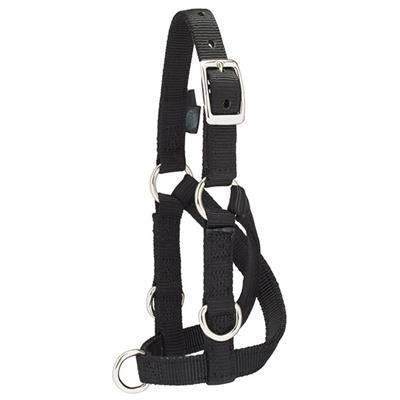 Image of Sheep/Goat Training Halter