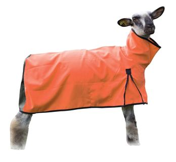 Image of Sheep Blanket Canvas