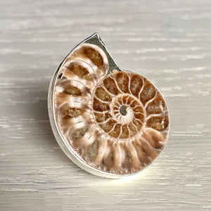 Ammonite and Silver Ring